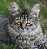 Katt porträtt — Stockfoto