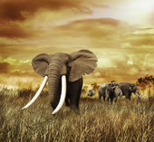 Elephants At Sunset — Stock Photo