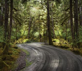 Rain Forest With A Dirt Road — Stock fotografie