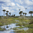FloridWetlands Scenic View — Stock Photo #38064871