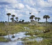 Florida Wetlands Scenic View — Stock Photo