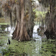 Stock Photo: Florida Wetlands