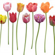 Tulips Flowers In A Row — Stock Photo #39351191