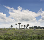 Florida Wetlands — Stock Photo