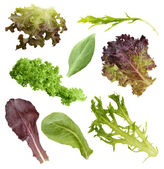 Salad Leaves Collection — Stock Photo