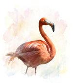 Flamingo - Watercolor Illustration  — Stock Photo