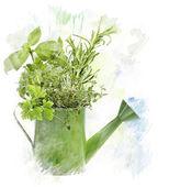 Watercolor Image Of  Herbs — Stockfoto