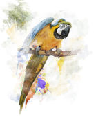 Watercolor Image Of Parrot — 图库照片