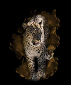Watercolor Image Of  Leopard  — Stock Photo