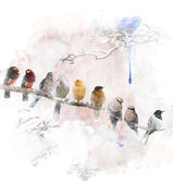 Watercolor Image Of Perching Birds — Stock Photo