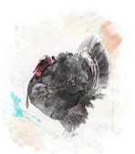Watercolor Image Of  Turkey Bird — Stock Photo
