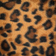 Leopard or jaguar skin pattern background — Foto de stock #13243565