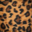 Leopard or jaguar skin pattern background — Stockfoto #13243565