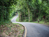 Curve asphalt road view — Stock Photo