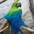 "Blue and Gold macaw, Scientific name ""Ara ararauna"" bird - Stock Photo"