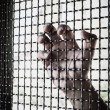 Stock Photo: Hand and mesh cage for freedom