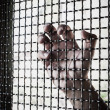 Hand and mesh cage for freedom — Stock Photo