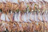 Dry squid in row — Stock Photo