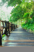 Walkway of wooden planks through the forest — Stock Photo