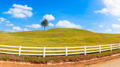 Green hill summer landscape panorama — Stock Photo