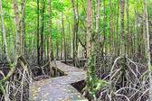 Mangrove forest Boardwalk way — Foto de Stock