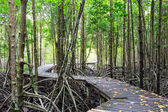 Mangrove forest Boardwalk way — Stock Photo