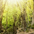 Stock Photo: Morning light in forest