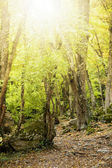Morning light in the forest — Stock Photo