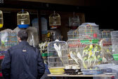 ODESSA, UKRAINE - NOVEMBER 4: birds on the stall on November 4, 2012 in Odessa, Ukraine. — Foto de Stock