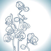 Orchid isolated on white — Stock Vector