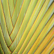 Colorful texture and pattern detail banana fan — Stock Photo