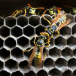 Nest of wasps — Stock Photo #15022355