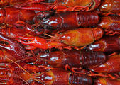 Background of red cooked crayfish — Stock Photo