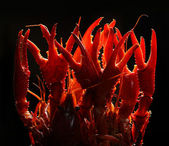 Crayfish claws — Stock Photo