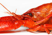 Closeup of crayfish — Stock Photo