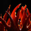 Crayfish claws on a black background — Stock Photo
