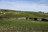 Cereal farming land, landscape — Stock Photo