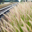 Stock Photo: Foxtail weed and railway in the nature