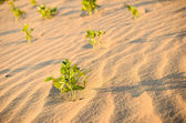 Green plant on the sand and sun — Foto Stock
