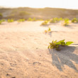Green plant on the sand and sun - Stock Photo