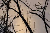 Bird silhouette on branch — Stock Photo