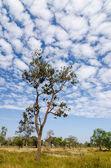 Albero e il cielo — Foto Stock