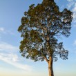 Land tree and sky — Stock Photo