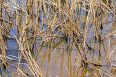 Kahverengi çimen — Stok fotoğraf