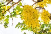 Golden Shower — Stock Photo