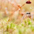 Jumping spider in green nature — Stock Photo