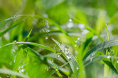 Grass and water drops — Stock Photo
