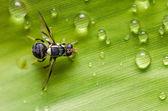 Dossiers de vol stationnaire dans la nature — Photo