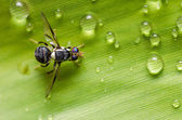 Hover files in the nature — Stock Photo