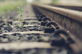 Railway and plant — Stock Photo